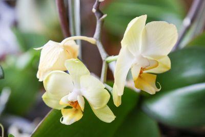 Verkrüppelte Blüten im Winter