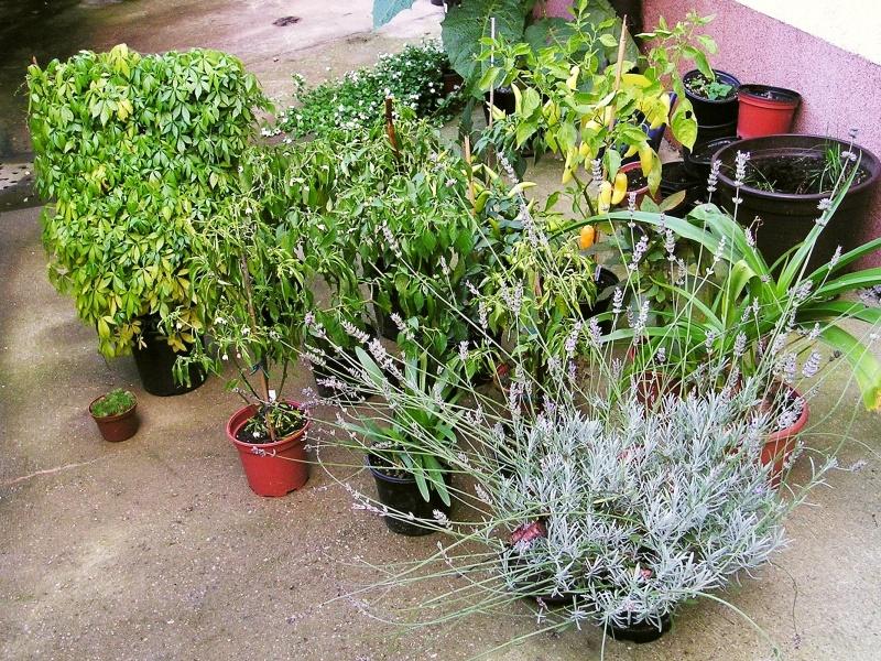 pflanzen in den keller einr umen teil 1 majas pflanzenblog. Black Bedroom Furniture Sets. Home Design Ideas