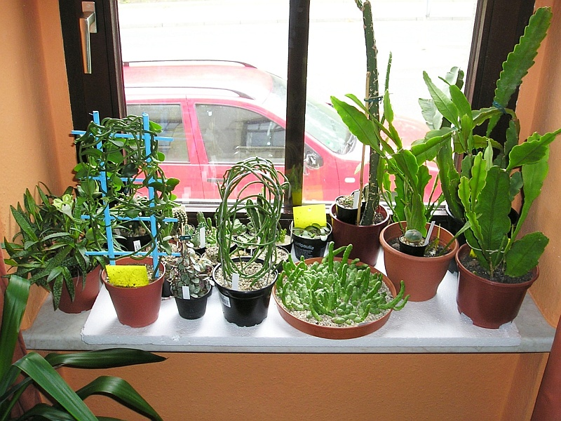 warme f e f r zimmerpflanzen im winter majas pflanzenblog. Black Bedroom Furniture Sets. Home Design Ideas