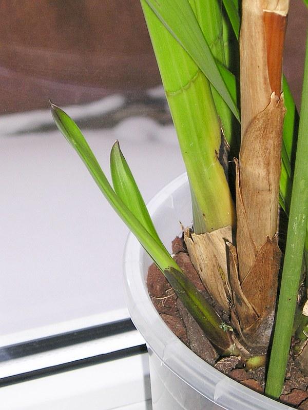 startschuss zum wachsen ist gefallen majas pflanzenblog. Black Bedroom Furniture Sets. Home Design Ideas
