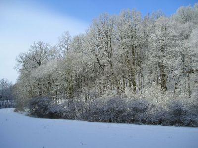 Winter Sauergras 2006