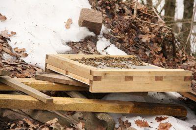 Abgerutschte Bienenbeute