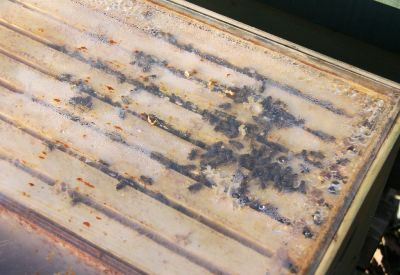 Bienenvolk im Januar