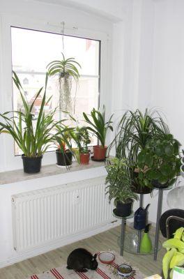 Pflanzen in der Küche