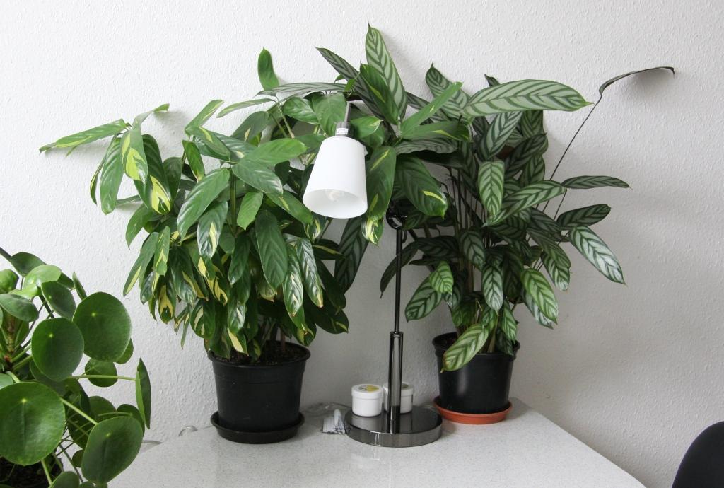 zimmerpflanzen warme wohnzimmer umzug mit zimmerpflanzen im winter - Zimmerpflanzen Warme Wohnzimmer