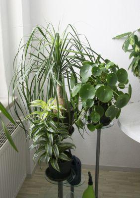 Pflanzenständer in der Küche