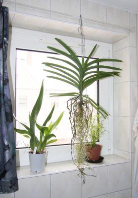 Pflanzen im Bad