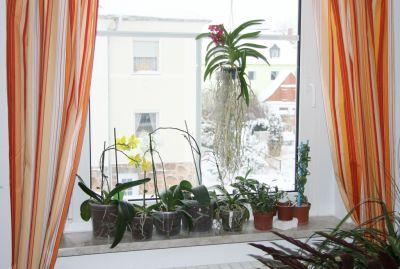 Pflanzen am Wohnzimmerfenster