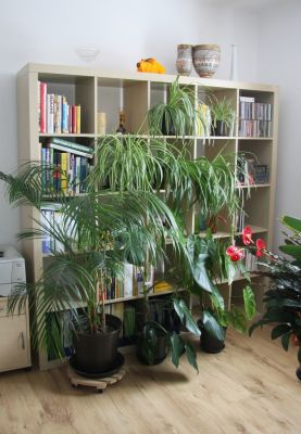 Pflanzen im Raumteiler