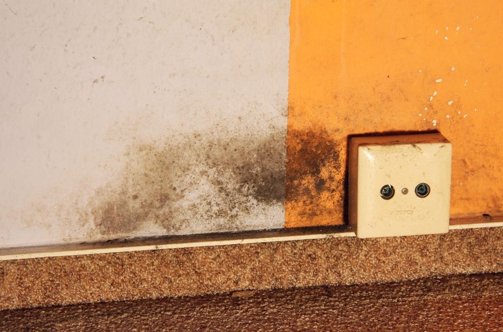 schimmel in der wohnung: mein erfahrungsbericht » majas pflanzenblog, Wohnzimmer