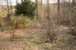 Rückschnitt Garten März 2011