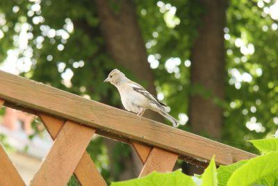 Unbekanntes Vögelchen