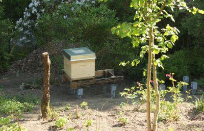 Erstes Bienenvolk im Garten
