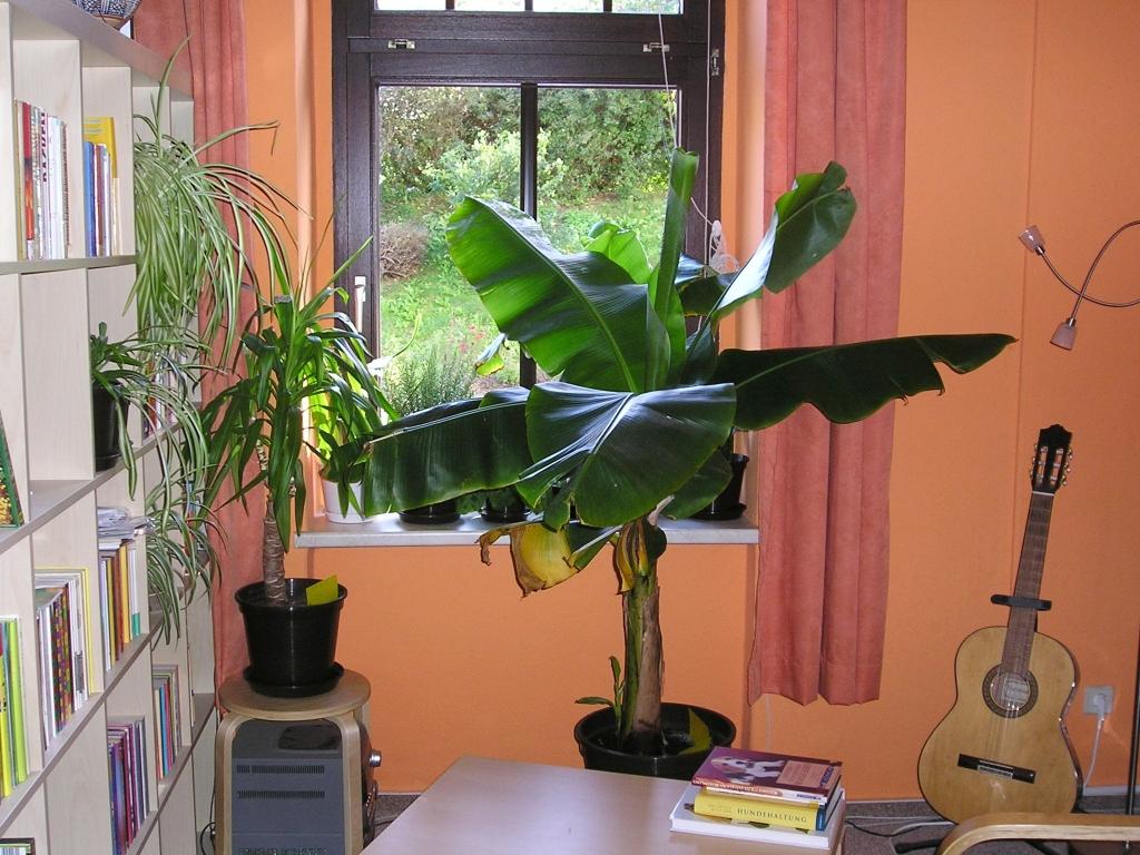 Zimmerpflanzen Sonnenfenster pflanzen für südfenster und südseite majas pflanzenblog
