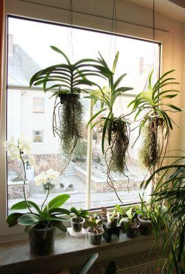 Orchideen im Wohnzimmer