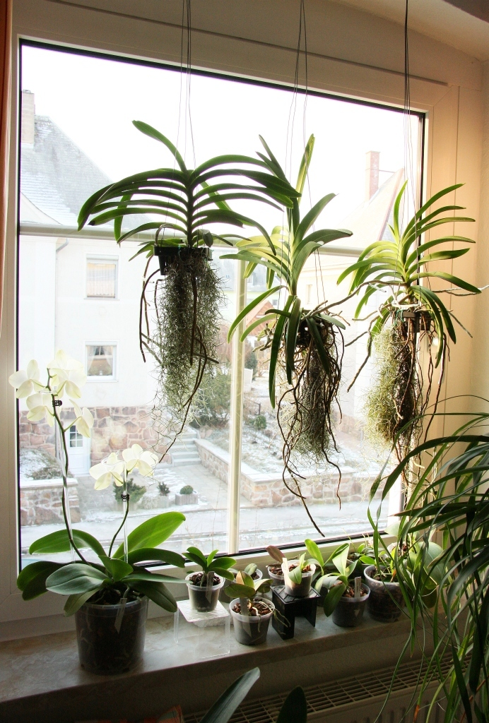 Endlich FRHLING Majas Pflanzenblog