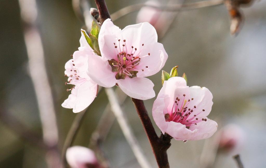 Es wird bunt im garten majas pflanzenblog - Pfirsichbaum im garten ...