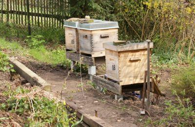 Geplanter Weg zu den Bienenbeuten
