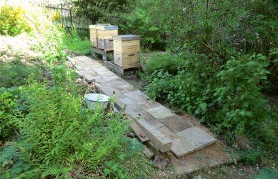 Weg zum Bienenstand
