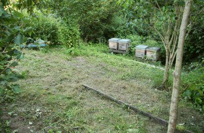 Blick zu den Bienenbeuten