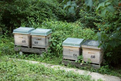 Dadant-Bienenbeuten