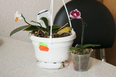 Neue Orchideen