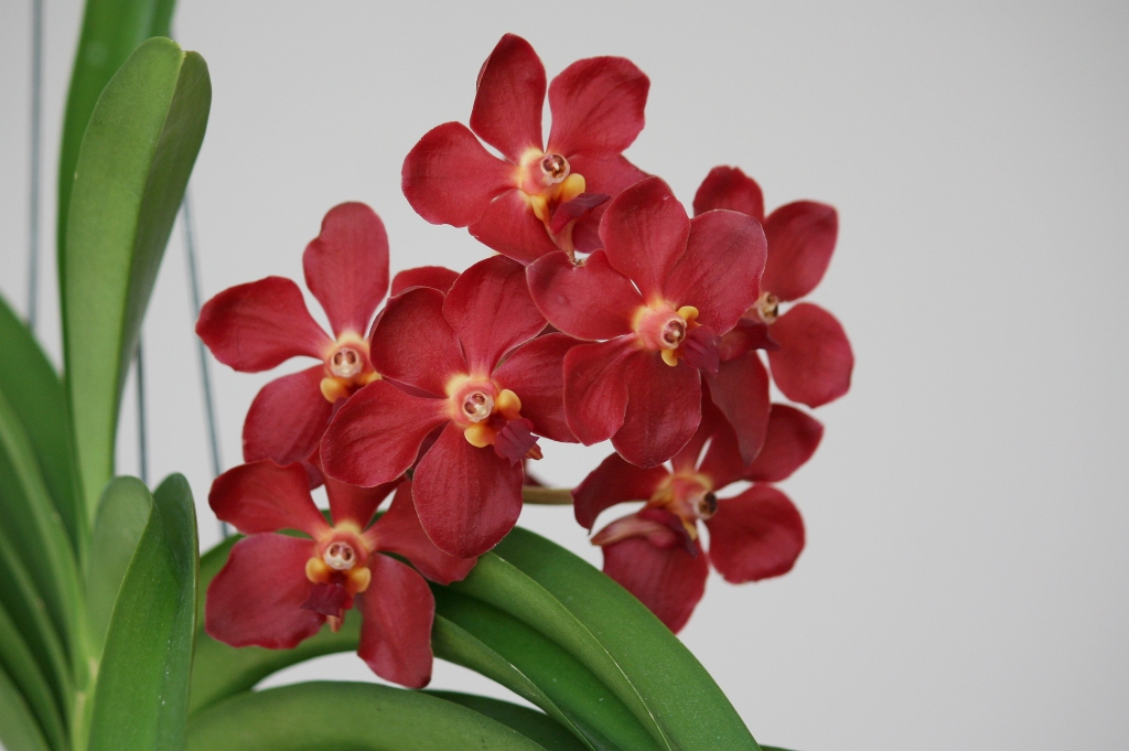 heisse storys die blühende orchidee