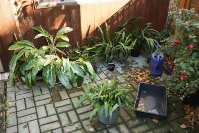 Orchideen regengeschützt stellen