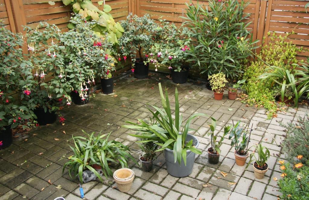 unser sitzplatz und orchideen im herbst majas pflanzenblog. Black Bedroom Furniture Sets. Home Design Ideas