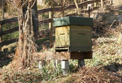 10er Dadantbeute mit Honigraum