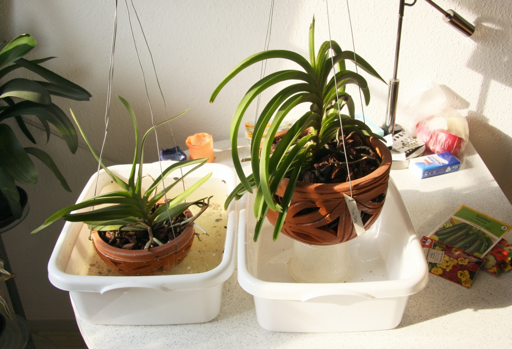 nachhaltige regenwassernutzung f r den garten majas pflanzenblog. Black Bedroom Furniture Sets. Home Design Ideas