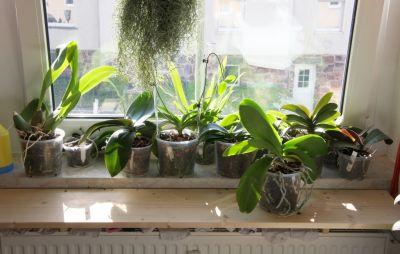 Radikalkur bei meinen Orchideen