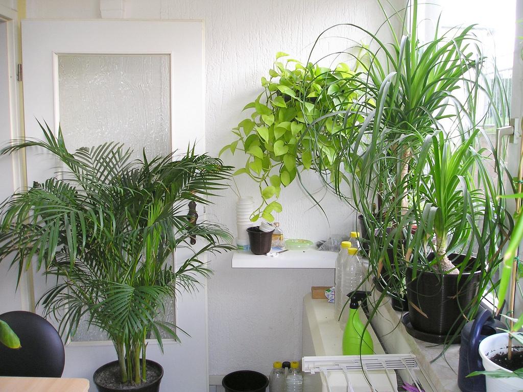 alte erinnerungen an meinen wintergarten majas pflanzenblog. Black Bedroom Furniture Sets. Home Design Ideas