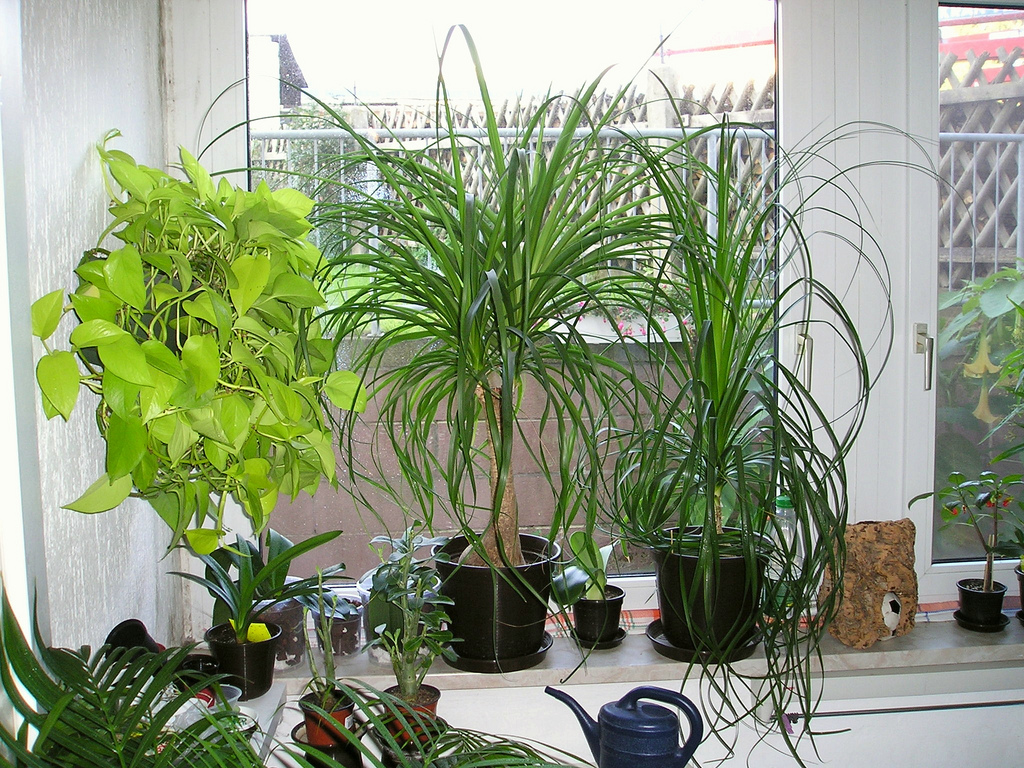 Erfreut Tipps Pflege Pflanzen Wintergarten Fotos - Die Designideen ...