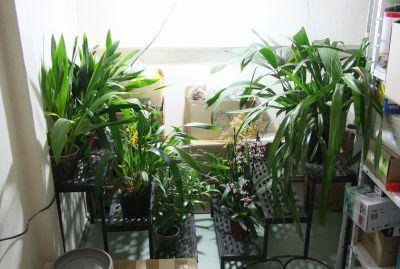 Überwinterung Orchideen