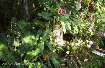 Orchideenschau Leipzig 2014