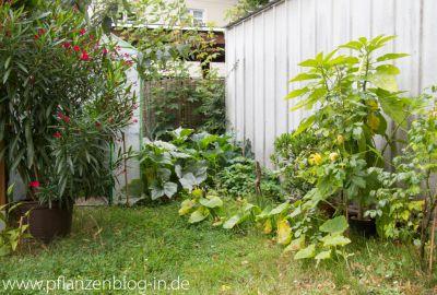 Oleander und Gewächshaus
