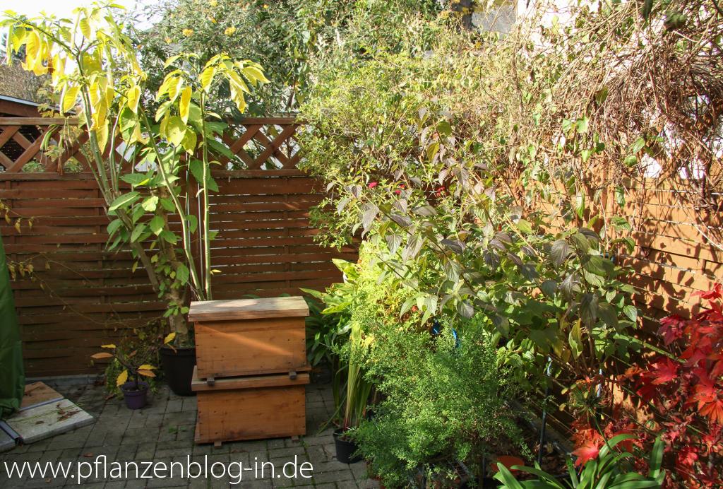 ein bl tenreicher november geht zu ende majas pflanzenblog. Black Bedroom Furniture Sets. Home Design Ideas