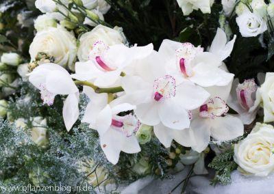 Cymbidium-Orchidee, Messe Frankfurt
