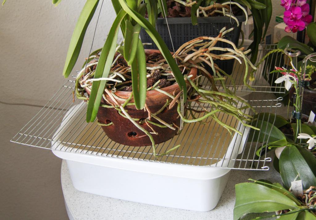 mehrere orchideen effektiv und schnell tauchen majas. Black Bedroom Furniture Sets. Home Design Ideas