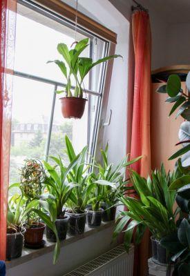 Orchideenfenster Schlafzimmer