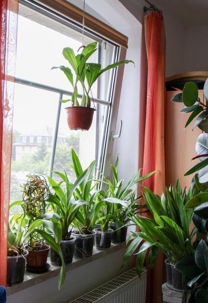 meine orchideenfenster juni 2015 majas pflanzenblog. Black Bedroom Furniture Sets. Home Design Ideas