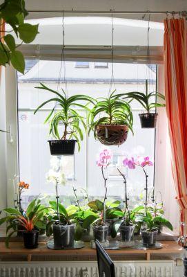 Orchideenfenster Küche