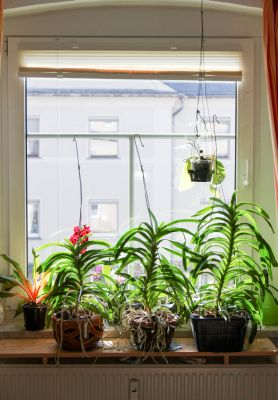 Orchideenfenster Wohnzimmer