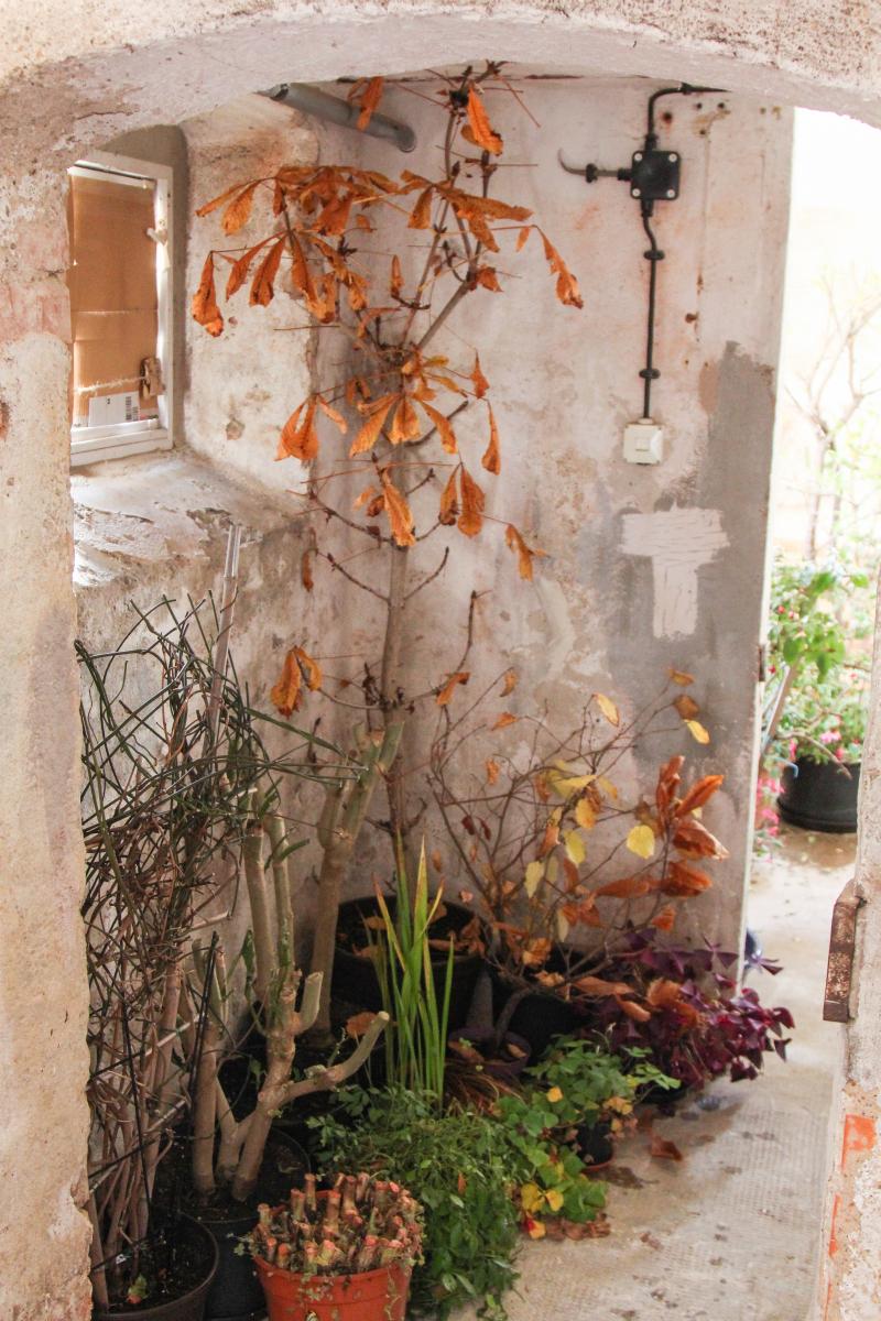 der erste frost und einr umen 2015 majas pflanzenblog. Black Bedroom Furniture Sets. Home Design Ideas