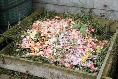 Rosenblüten auf dem Kompost