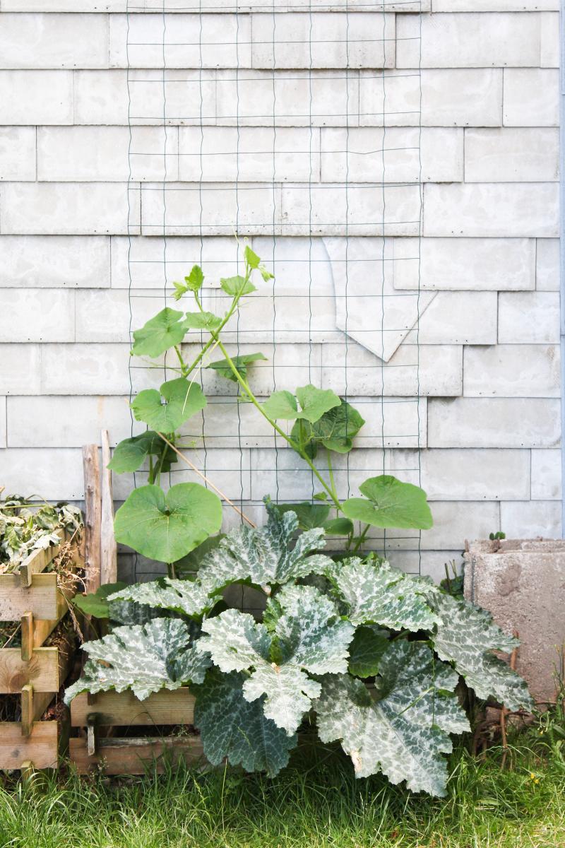 meine gem sepflanzen im kleinen garten am haus majas pflanzenblog. Black Bedroom Furniture Sets. Home Design Ideas