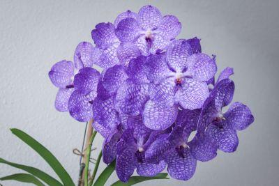 19 Blüten an Mutterpflanze
