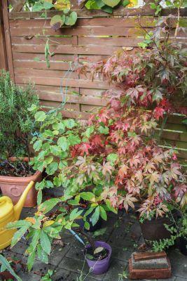 Laubbäume mit Herbstfärbung