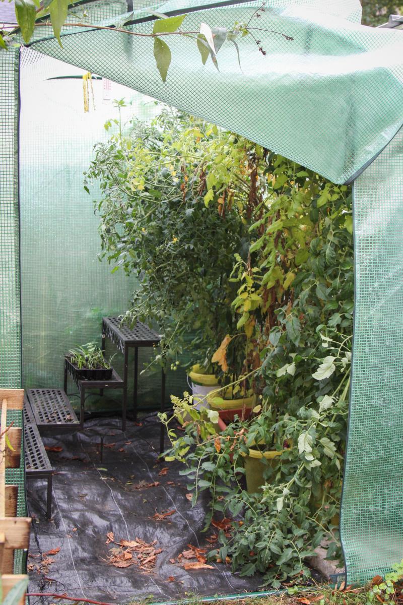 sitzplatz im dauerregen anfang oktober majas pflanzenblog. Black Bedroom Furniture Sets. Home Design Ideas